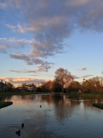 Beautiful light in Bushy Park near where I live.